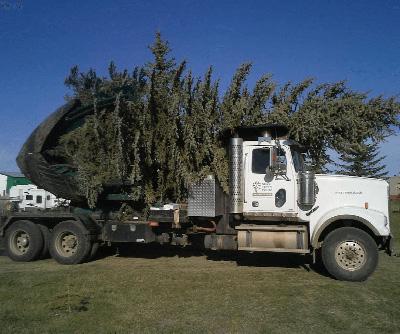tree moving